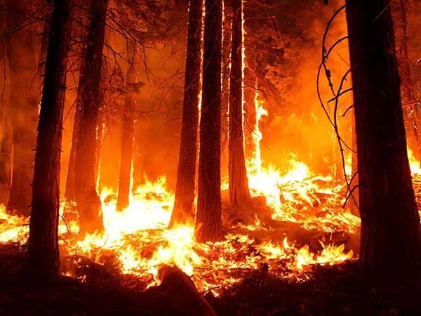 День защиты леса от пожара Горят секвои Йосемитского парка в Калифорнии